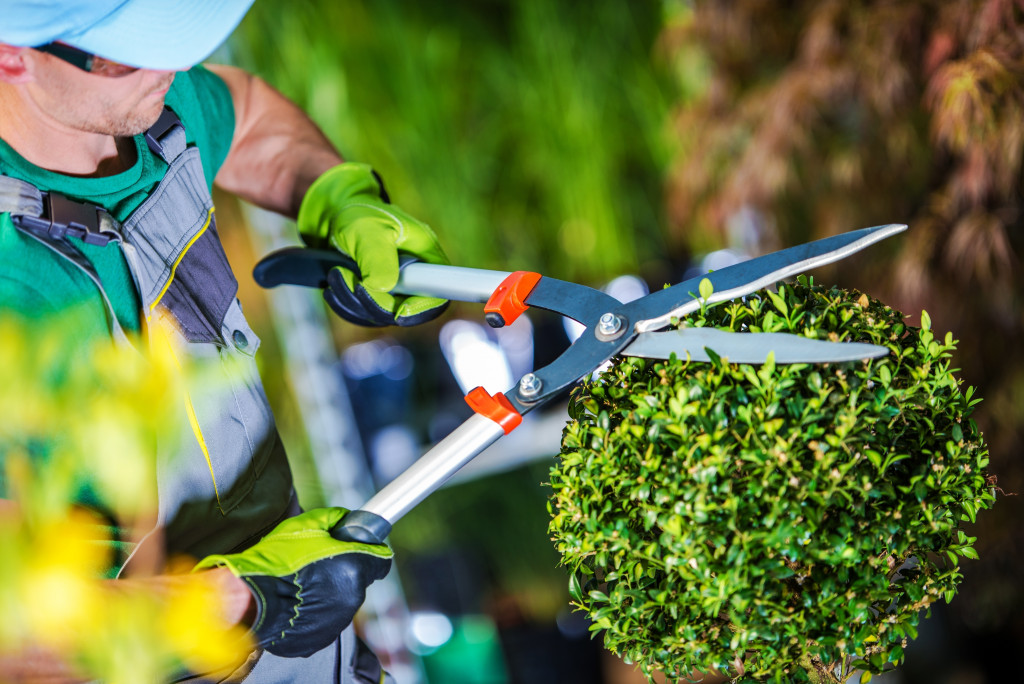 man trimming the hedge